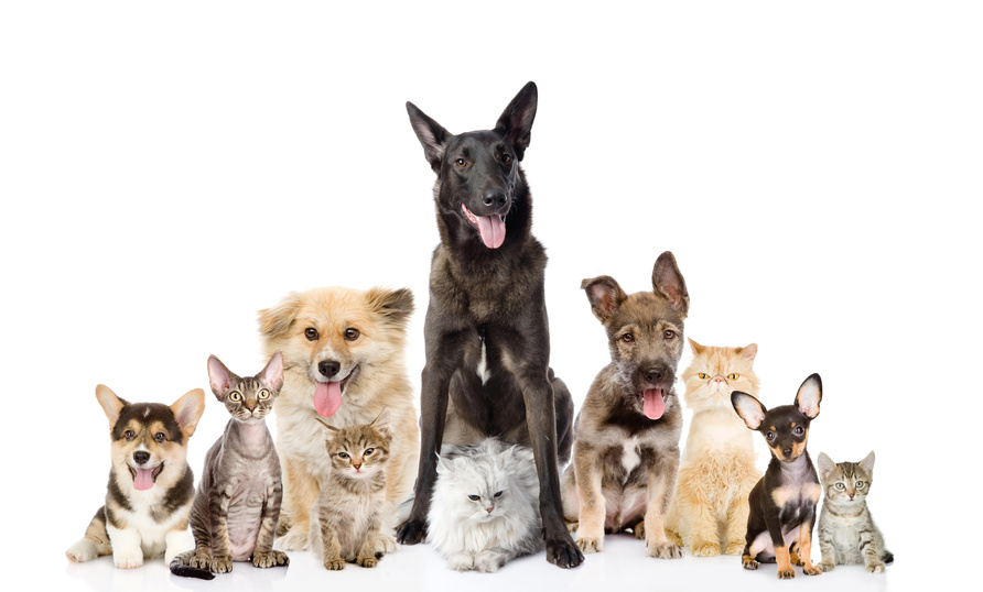 Group of dogs and cats - photo#4