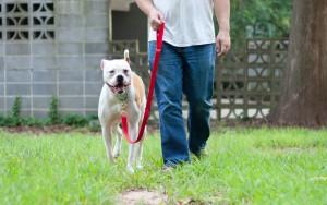 loose-leash-walking-exercises